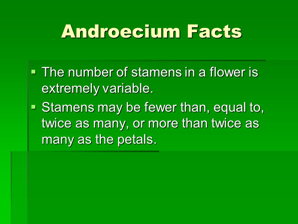 Androecium Facts The number of stamens in a flower is extremely variable.