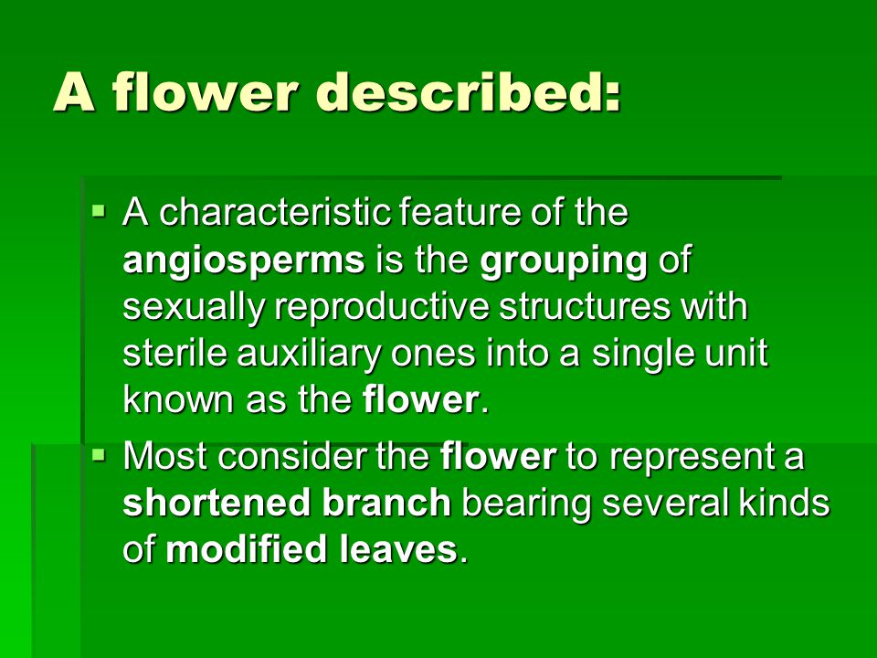 A flower described: