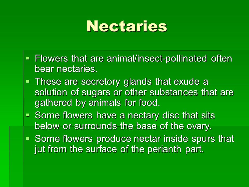 Nectaries Flowers that are animal/insect-pollinated often bear nectaries.