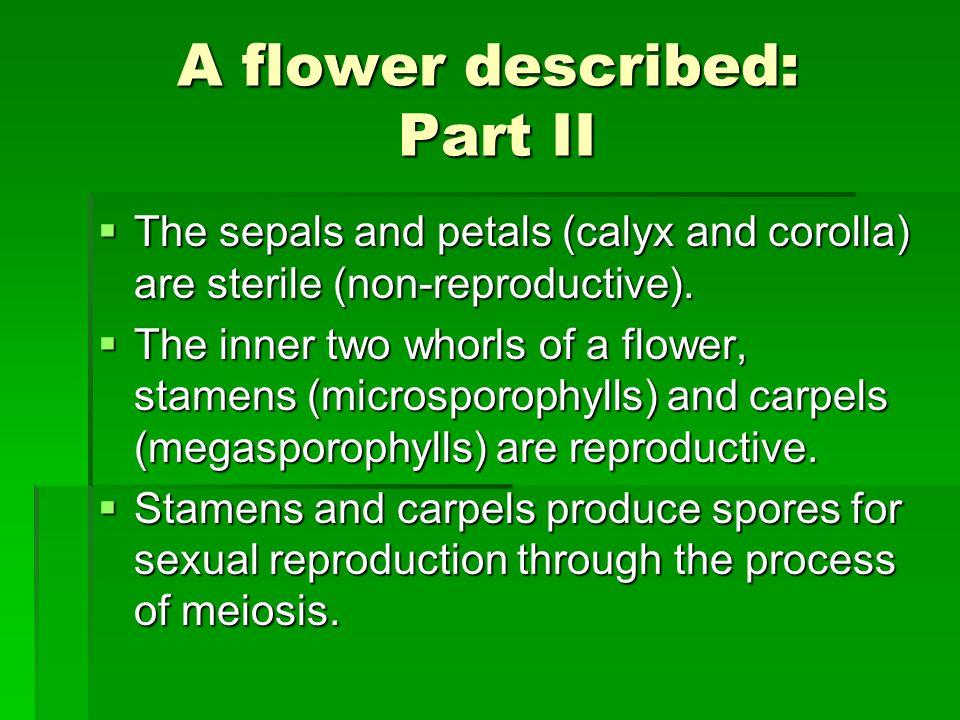 A flower described: Part II