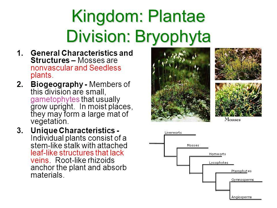 Kingdom: Plantae Division: Bryophyta