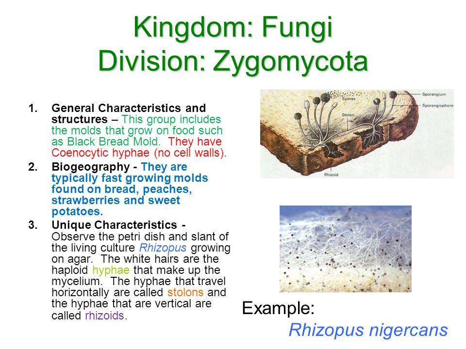 Kingdom: Fungi Division: Zygomycota