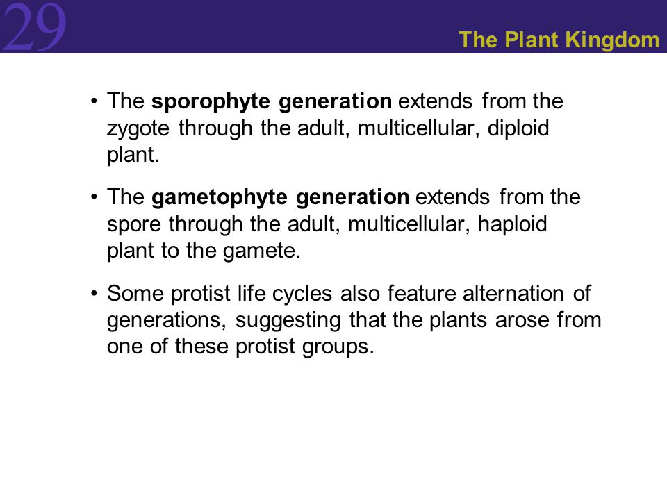 The Plant Kingdom The sporophyte generation extends from the zygote through the adult, multicellular, diploid plant.