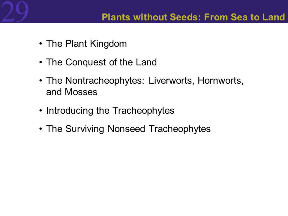 Plants without Seeds: From Sea to Land