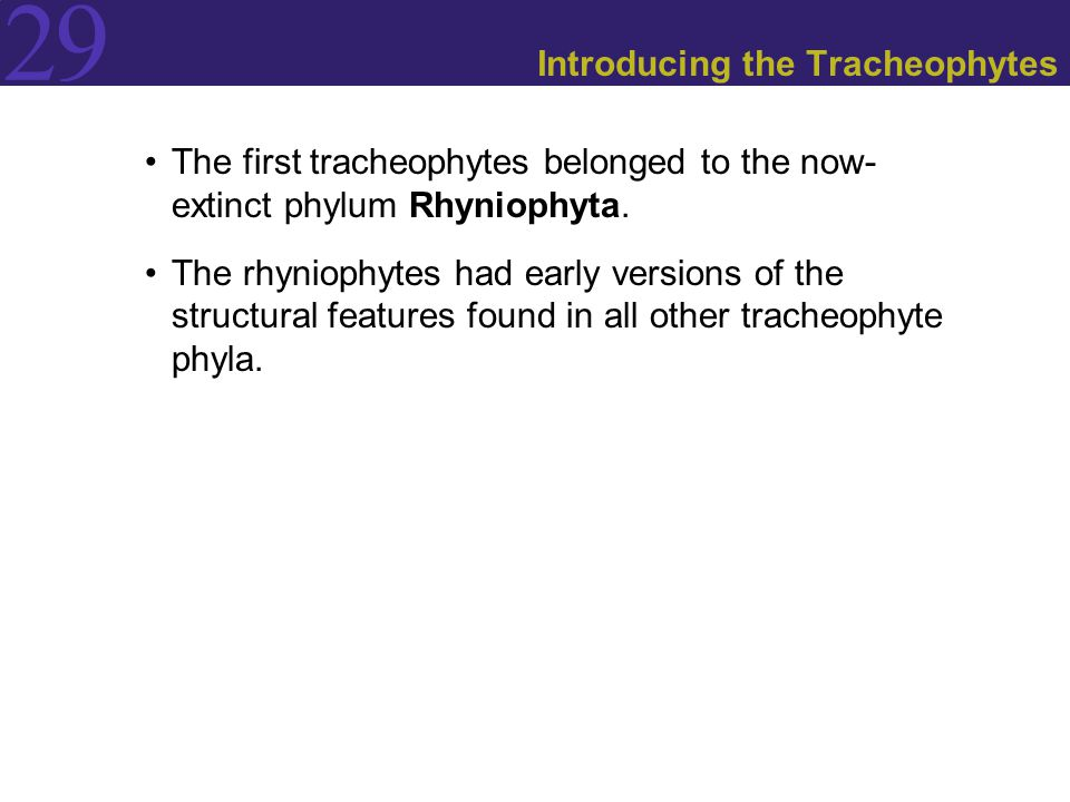 Introducing the Tracheophytes