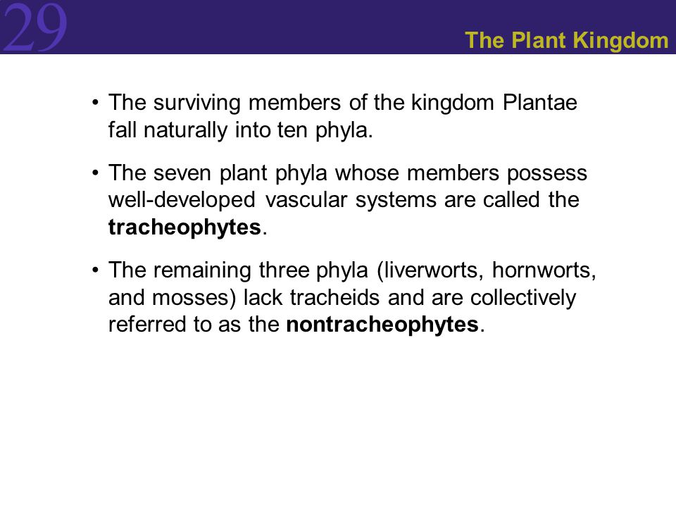 The Plant Kingdom The surviving members of the kingdom Plantae fall naturally into ten phyla.