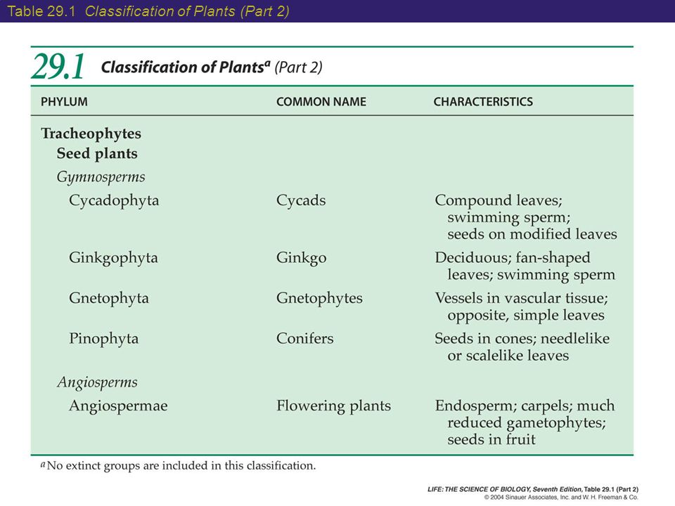 Table 29.1 Classification of Plants (Part 2)