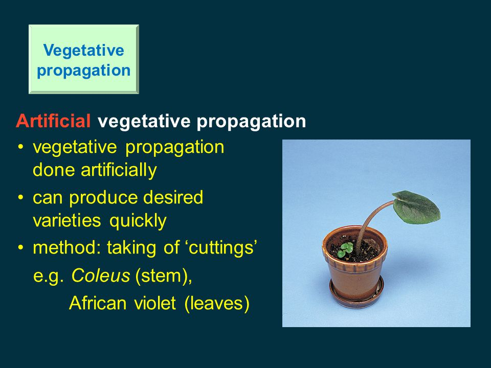 Vegetative propagation Artificial vegetative propagation