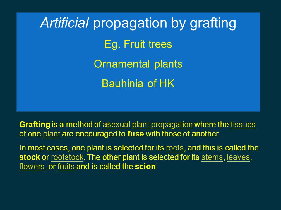 Artificial propagation by grafting