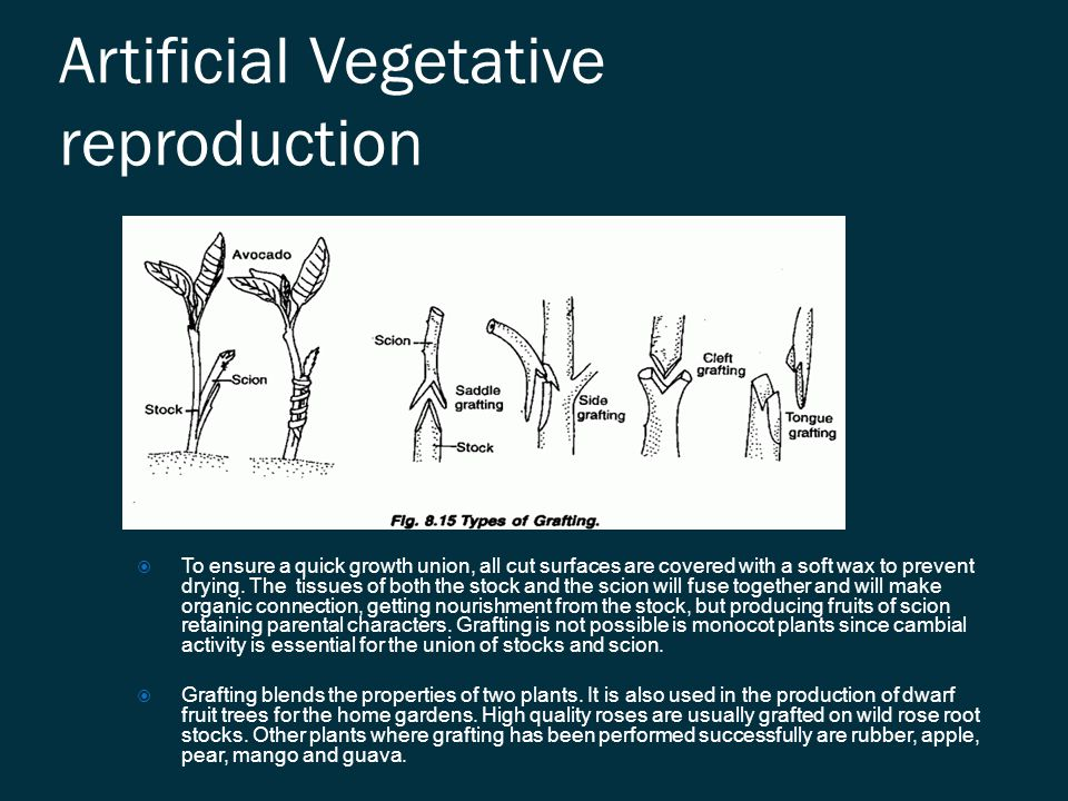 Artificial Vegetative reproduction