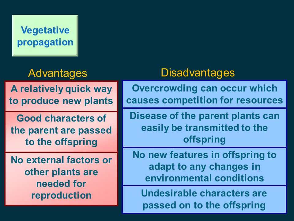 Advantages Disadvantages Vegetative propagation