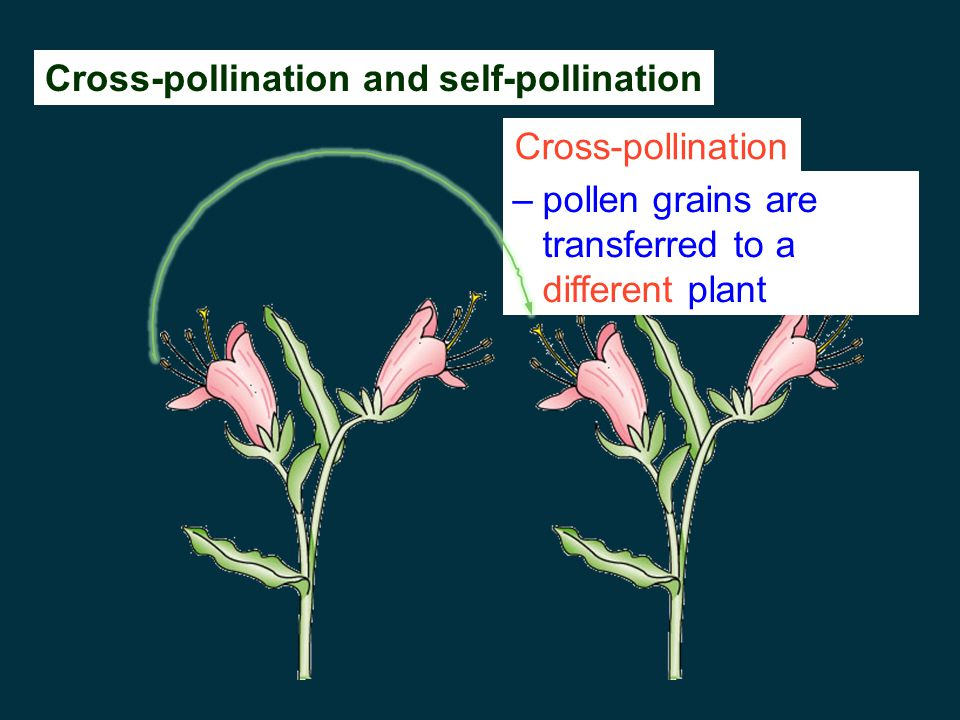 Cross-pollination and self-pollination