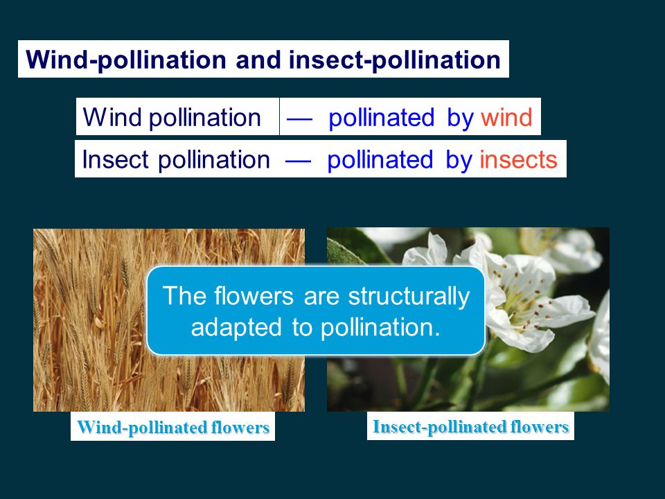 Wind-pollination and insect-pollination