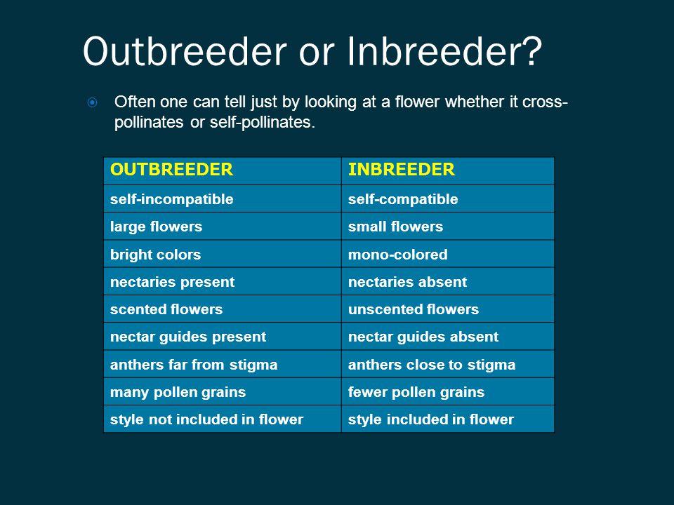 Outbreeder or Inbreeder