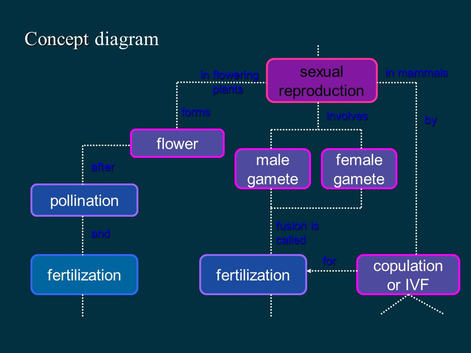 Concept diagram sexual reproduction flower male gamete female gamete
