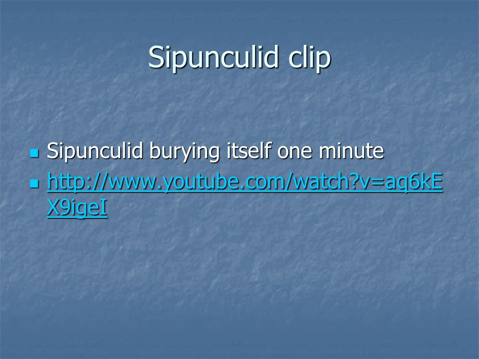 Sipunculid clip Sipunculid burying itself one minute