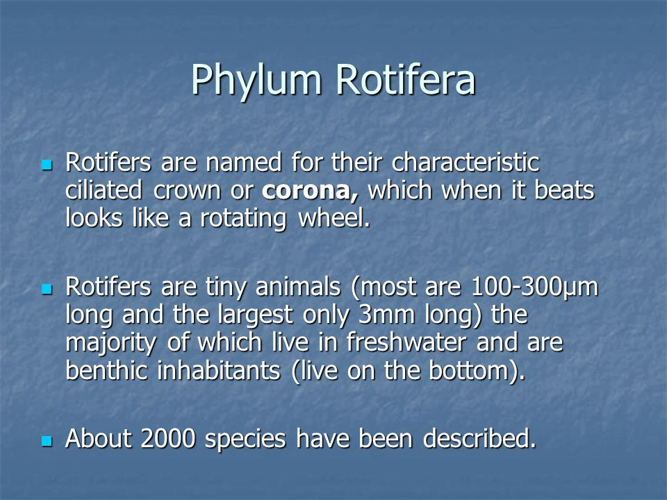 Phylum Rotifera Rotifers are named for their characteristic ciliated crown or corona, which when it beats looks like a rotating wheel.