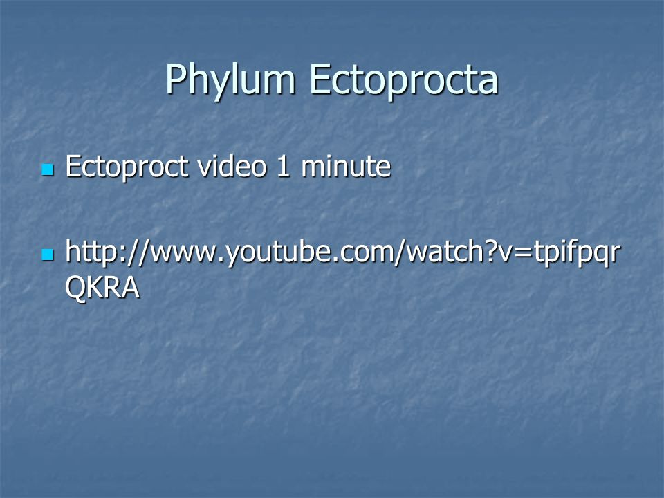 Phylum Ectoprocta Ectoproct video 1 minute