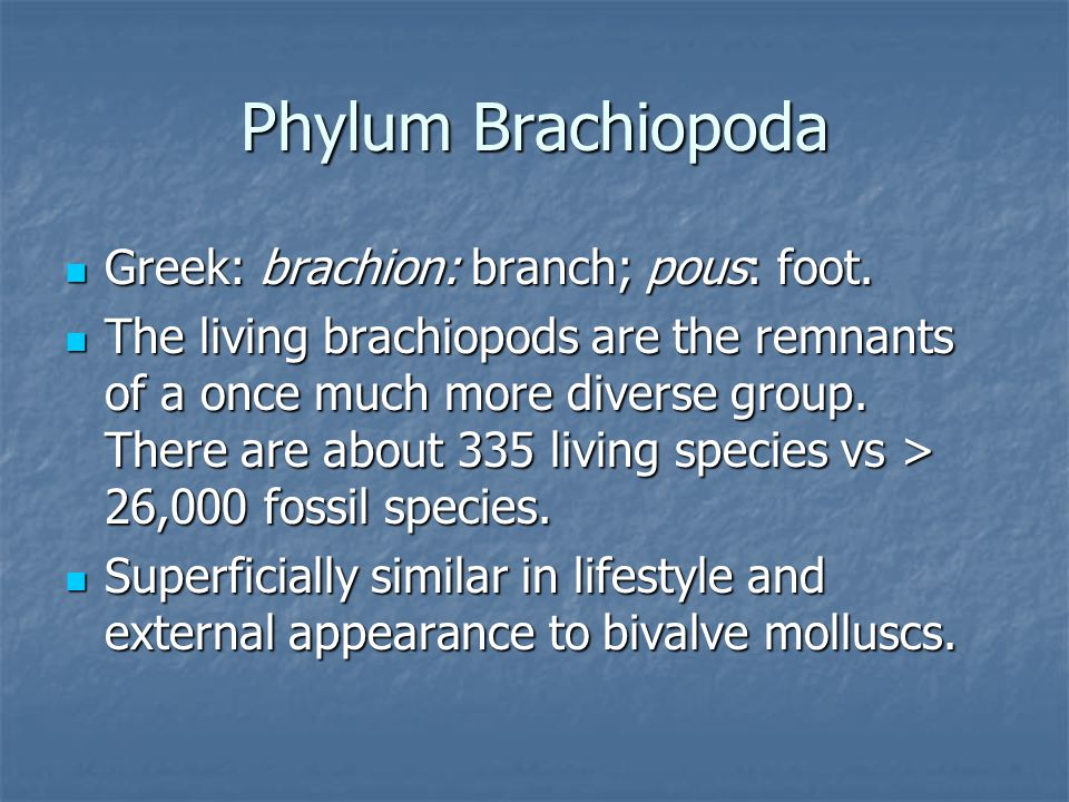Phylum Brachiopoda Greek: brachion: branch; pous: foot.