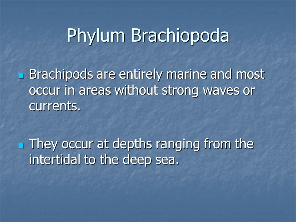 Phylum Brachiopoda Brachipods are entirely marine and most occur in areas without strong waves or currents.