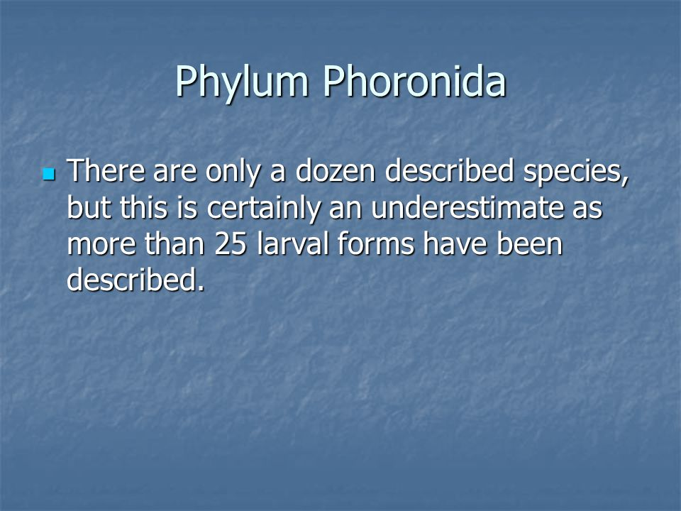 Phylum Phoronida There are only a dozen described species, but this is certainly an underestimate as more than 25 larval forms have been described.