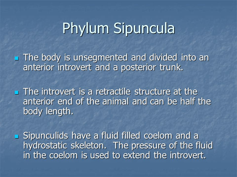 Phylum Sipuncula The body is unsegmented and divided into an anterior introvert and a posterior trunk.