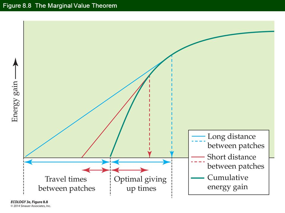 Figure 8.8 The Marginal Value Theorem