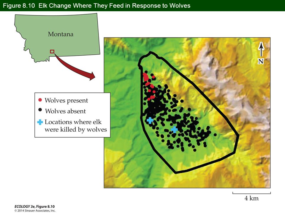 Figure 8.10 Elk Change Where They Feed in Response to Wolves