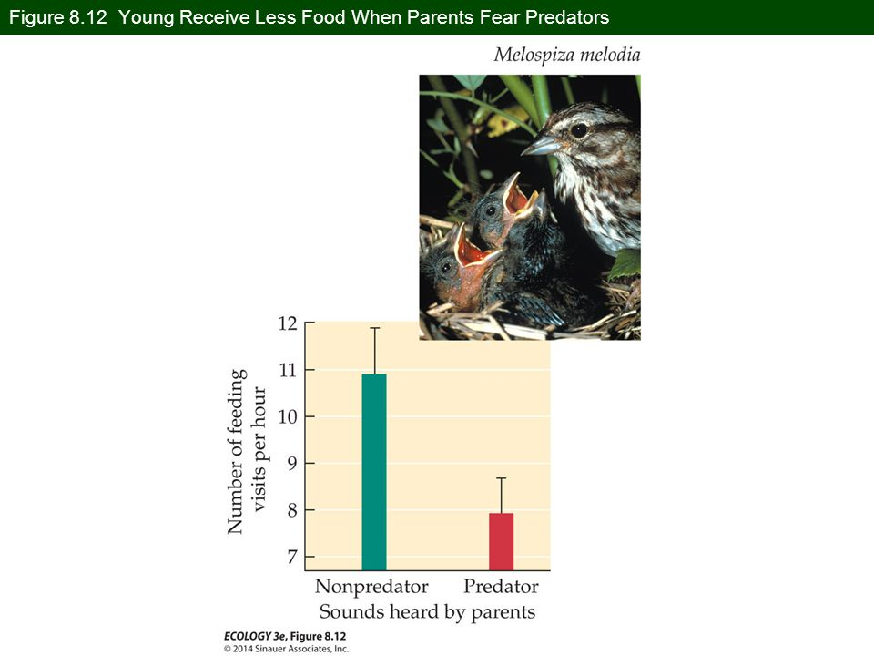 Figure 8.12 Young Receive Less Food When Parents Fear Predators