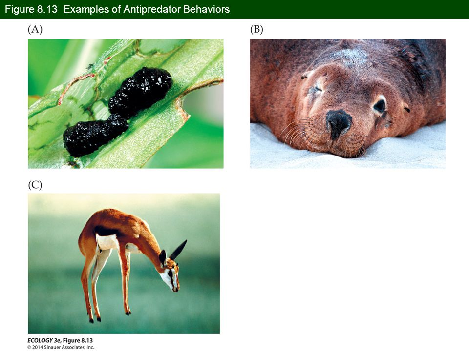 Figure 8.13 Examples of Antipredator Behaviors