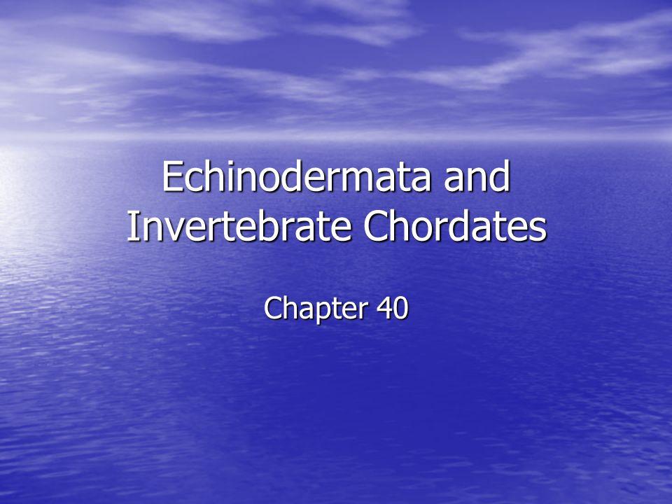 Echinodermata and Invertebrate Chordates