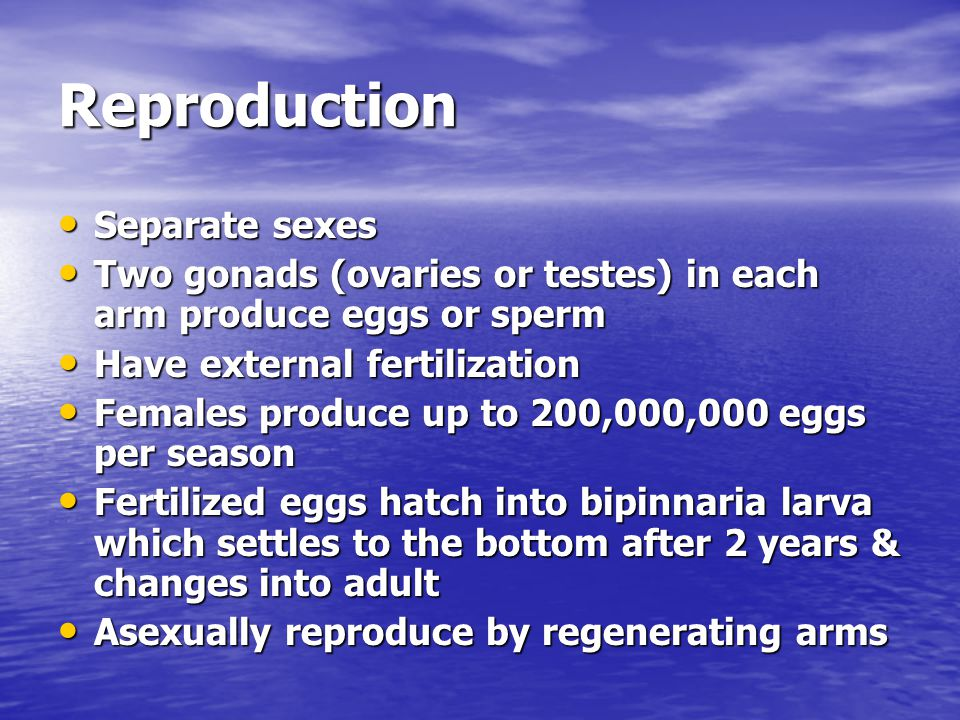 Reproduction Separate sexes