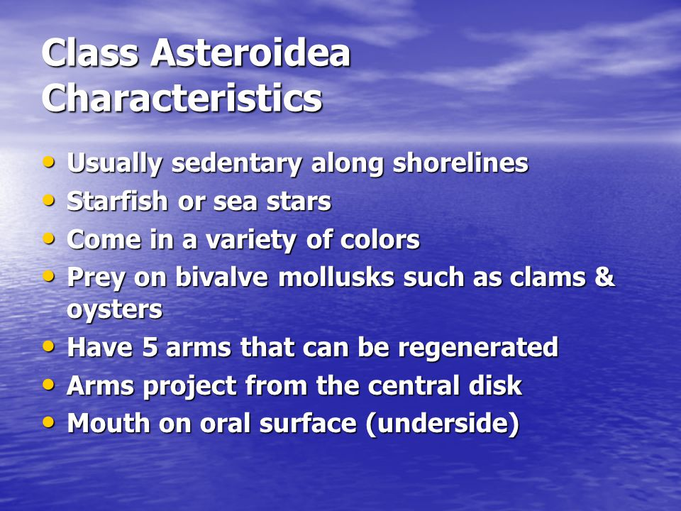 Class Asteroidea Characteristics