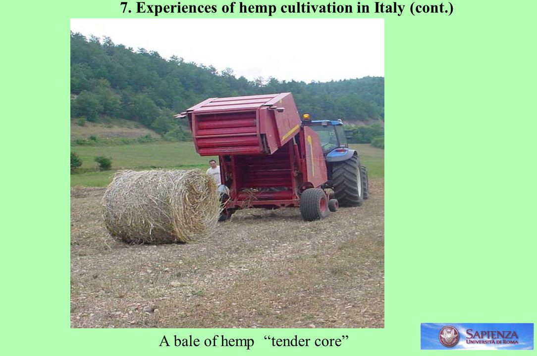 7. Experiences of hemp cultivation in Italy (cont.)