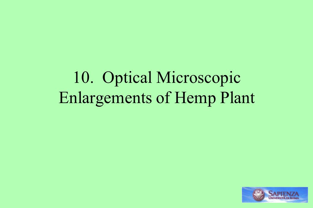 10. Optical Microscopic Enlargements of Hemp Plant