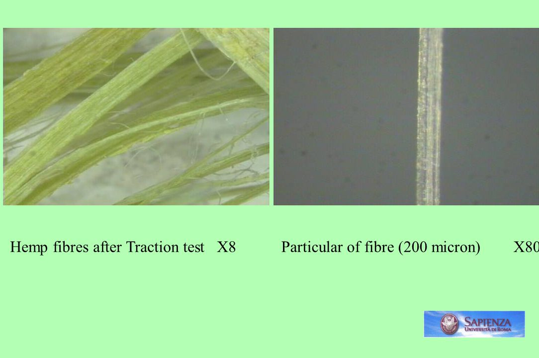 Hemp fibres after Traction test X8