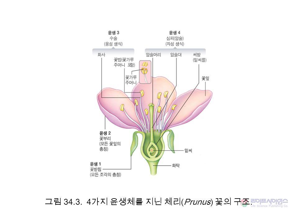 그림 34.3. 4가지 윤생체를 지닌 체리(Prunus) 꽃의 구조.