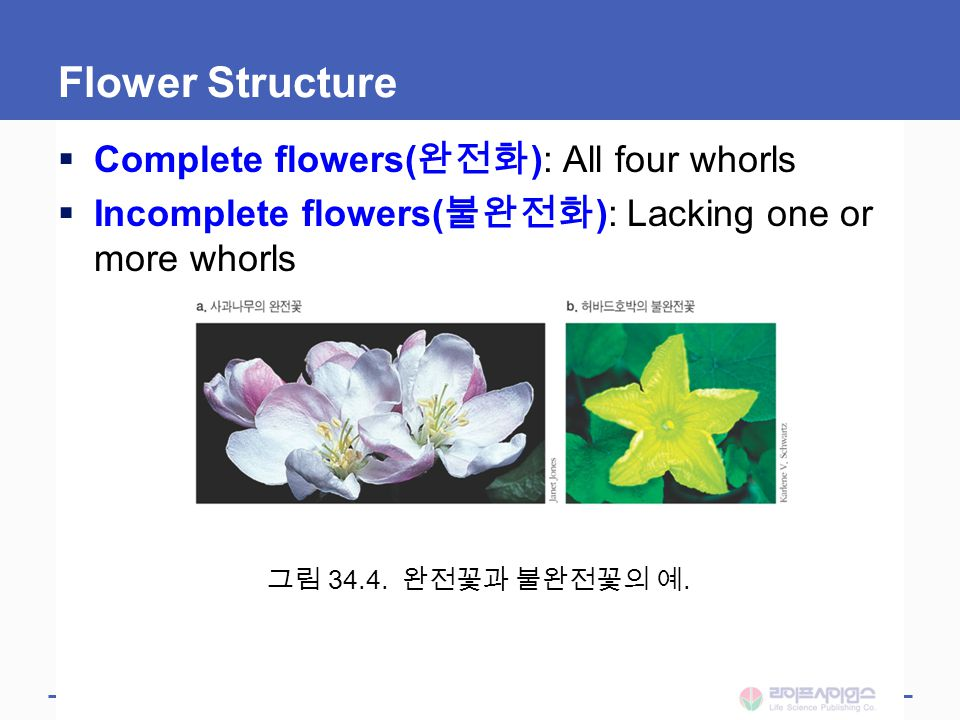 Flower Structure Complete flowers(완전화): All four whorls