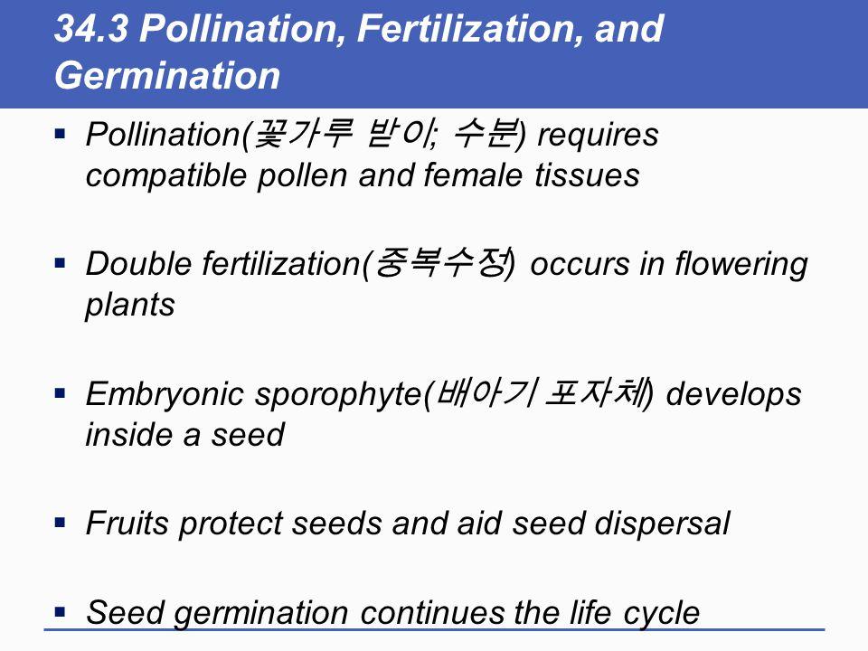 34.3 Pollination, Fertilization, and Germination