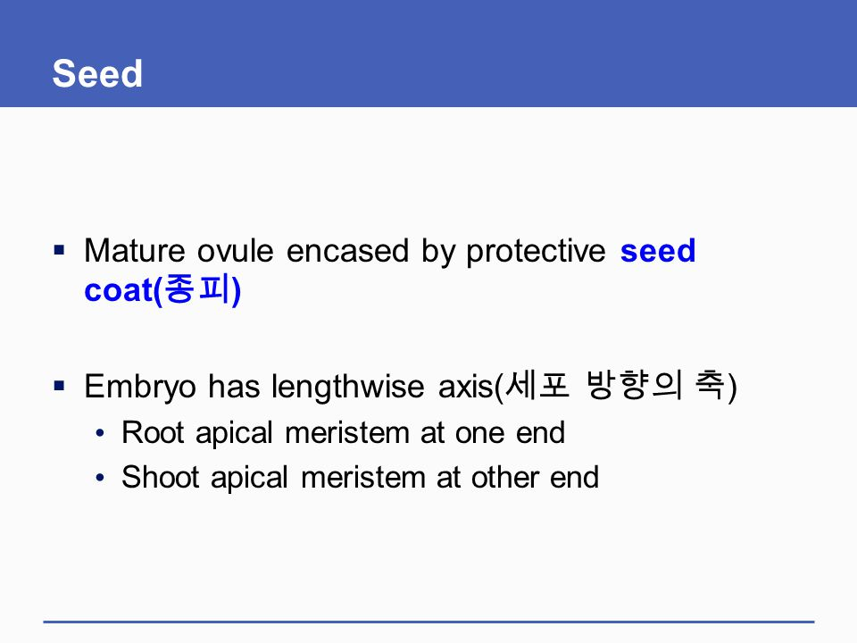 Seed Mature ovule encased by protective seed coat(종피)