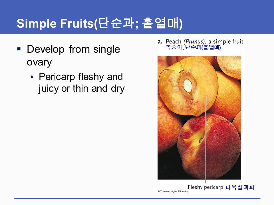 Simple Fruits(단순과; 홑열매)