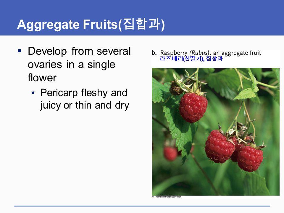 Aggregate Fruits(집합과)