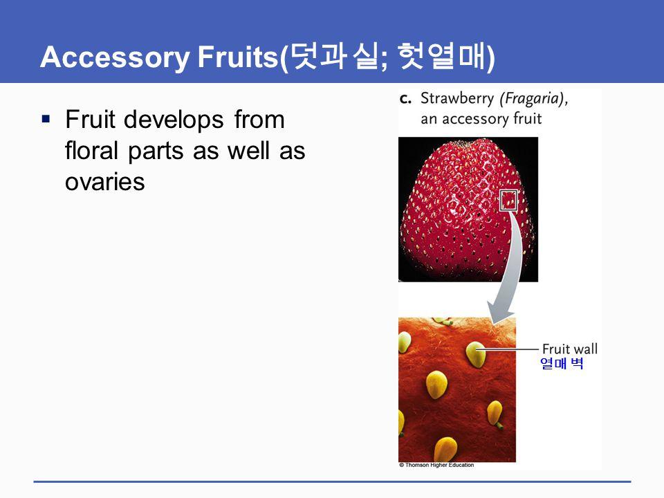 Accessory Fruits(덧과실; 헛열매)