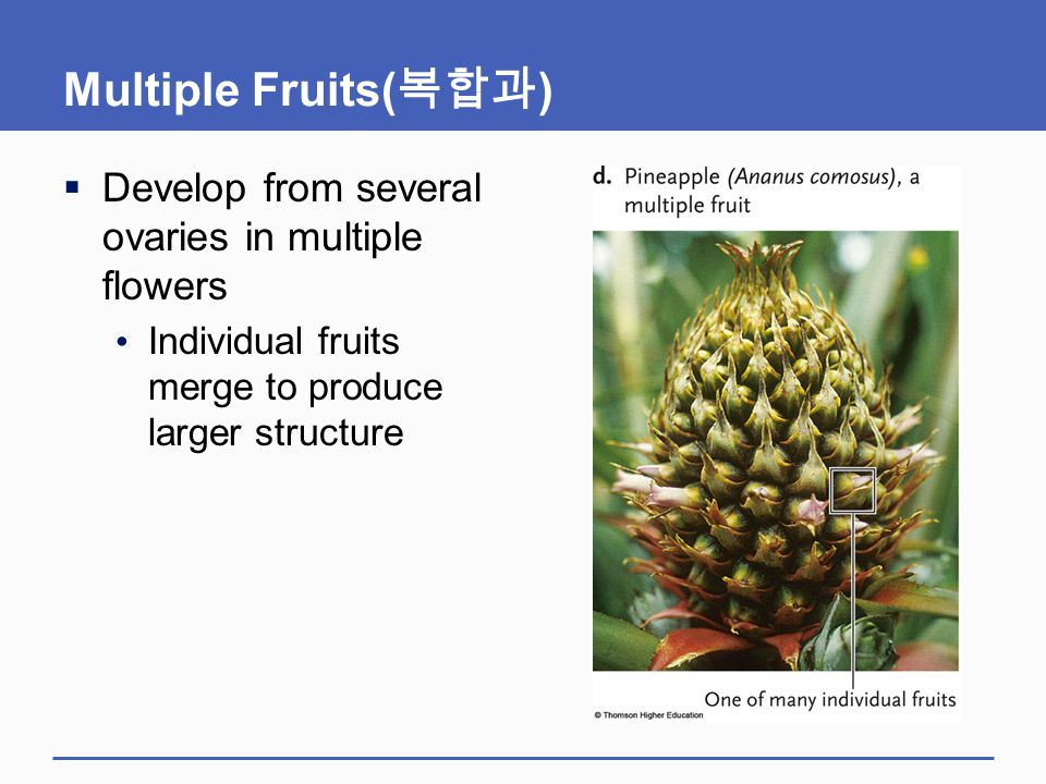 Multiple Fruits(복합과) Develop from several ovaries in multiple flowers