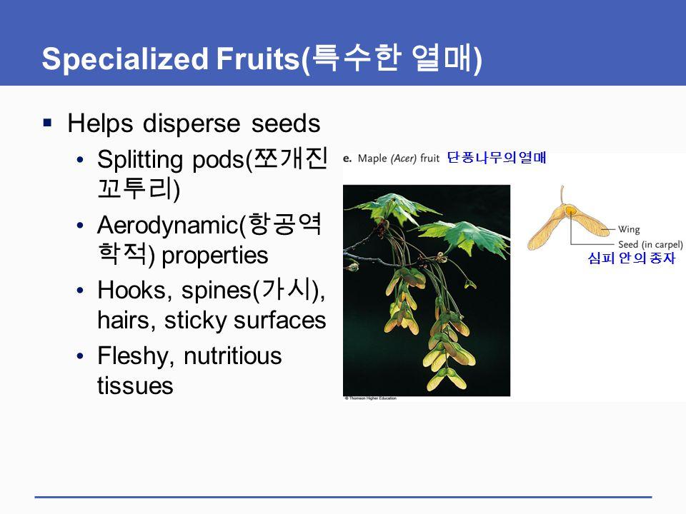 Specialized Fruits(특수한 열매)