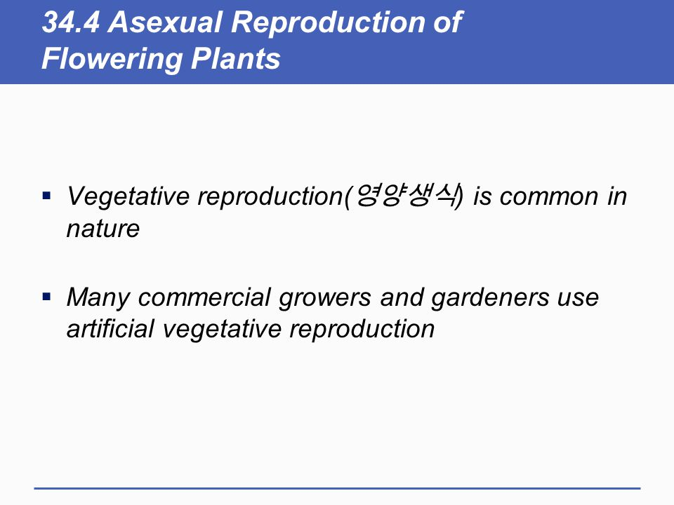 34.4 Asexual Reproduction of Flowering Plants