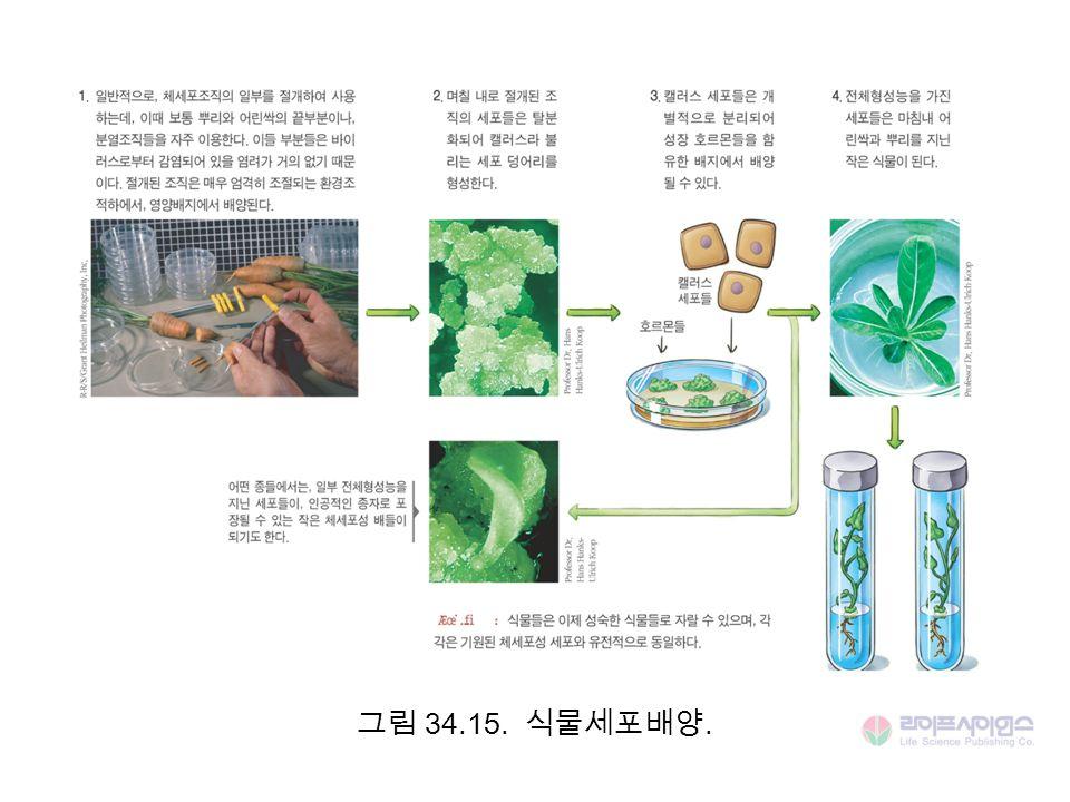 그림 34.15. 식물세포배양.