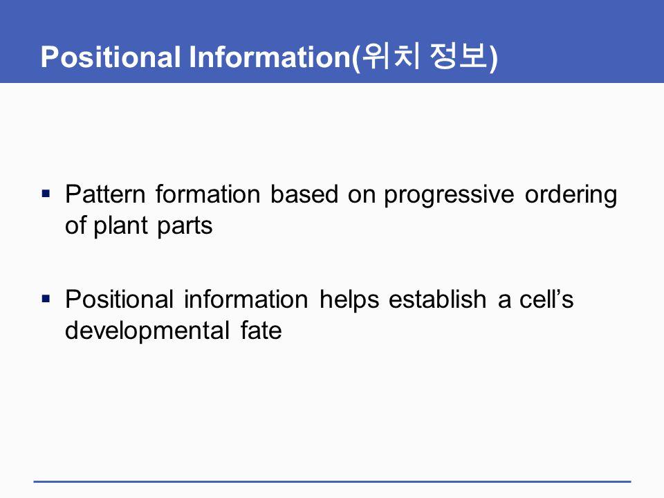 Positional Information(위치 정보)