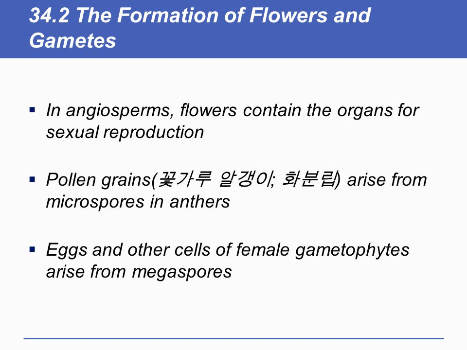 34.2 The Formation of Flowers and Gametes