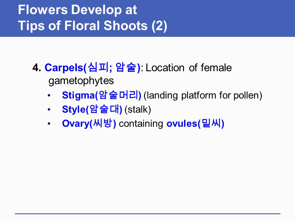 Flowers Develop at Tips of Floral Shoots (2)